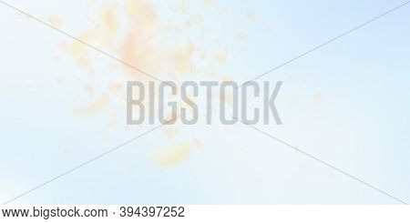 Yellow Orange Flower Petals Falling Down. Energetic Romantic Flowers Explosion. Flying Petal On Blue
