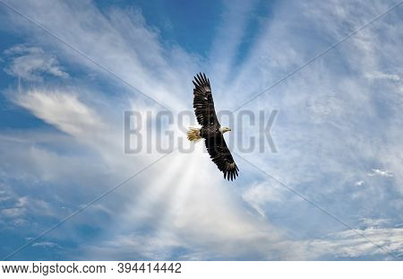 Magnificent Alaskan Bald Eagle Soaring High In The Clouds With Sunrays
