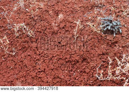 Tropical Laterite Soil Or Red Earth Texture. Red Sand Background. Cracked Red Soil