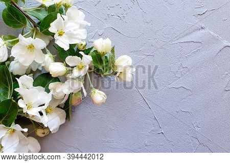 Blooming Apple Tree Branches On A Gray Background. The Basis For The Postcard. Place For Your Text O
