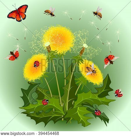Colored Illustration With Dandelions And Insects.dandelions, Ladybugs, Bees And A Butterfly In The I