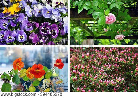 Set Of Garden Plants And Trees Of Different Species - Colorful Viola, Pink Rose, Orange Nasturtium A