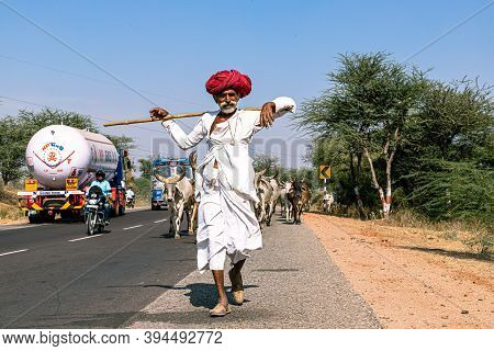 November 2019 Pushkar,rajasthan:a Rajasthani Shepherd On The Way With Its Herd Of Cows