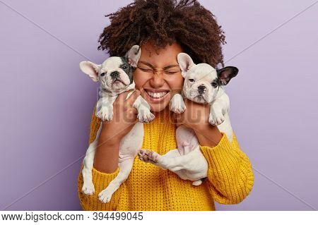 Close Up Shot Of Pleased Woman With Afro Hair Holds Two Puppies, Spends Leisure Time With Loyal Anim