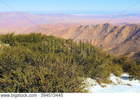 Chaparral Plants Besides Snow On A Mountainous Plateau Overlooking The Anza Borrego Desert Taken In