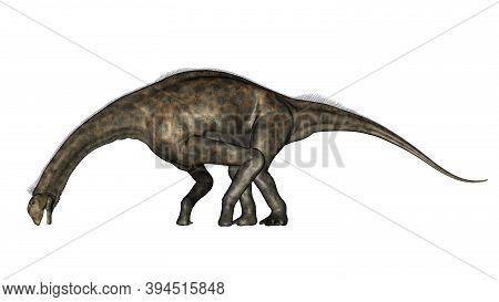 Atlasaurus Dinosaurs Drinking Isolated In White Background - 3d Render