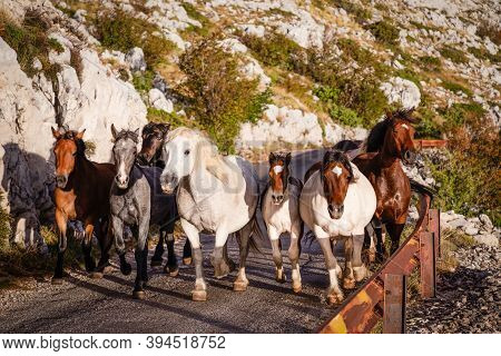 Herd Of Horses Galloping Down A Road In The Mountains, Biokovo, Croatia