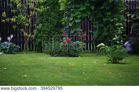 Blur Landscape In The Home Garden. Young Pine-tree And Garden Path. The Concept Of Landscaping Desig