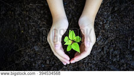Hands Holding A Green Young Plant In The Morning Light On Nature Background. Earth Day Concept