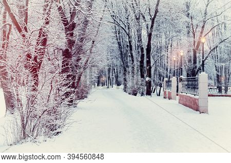 Winter evening landscape with falling snowflakes, winter snow covered alley, frosty winter trees and evening winter  street lights