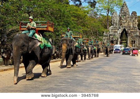 Elephants At Angkor Wat