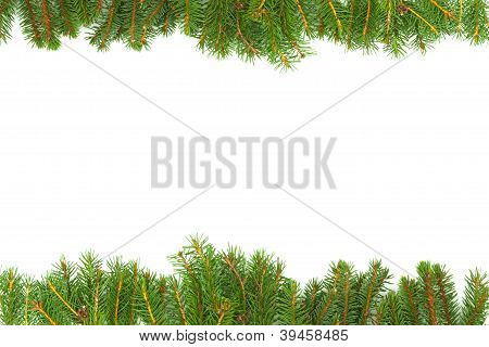 Background with fir