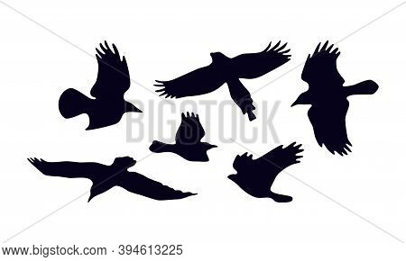 Stock Vector Set Of Soaring Birds Silhouettes. For Logo And Emblem Design. Isolated On White Backgro