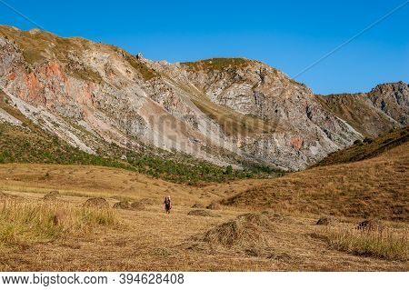 Male Hiker In Mountain Harvest Hay Meadow. Young Man Alone Trekking And Backpacking Near Sary Chelek