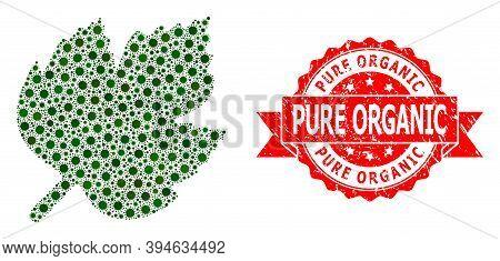 Vector Mosaic Grape Leaf Of Sars Virus, And Pure Organic Unclean Ribbon Stamp Seal. Virus Cells Insi