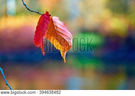 Single Red Autumn Foliage On A Tree Branch In Isolation Close-up On A Colored Blurred Background
