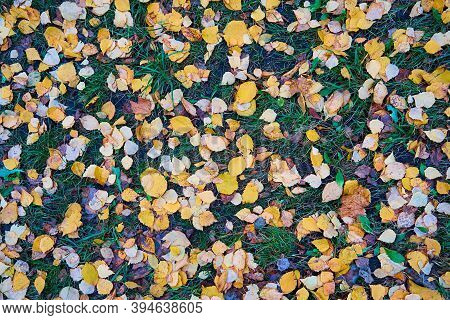 Autumn Foliage On Green Grass For Natural Backgrounds And Wallpaper