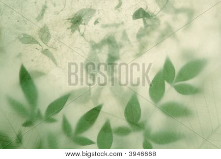 Layered Leaves On Textured Paper