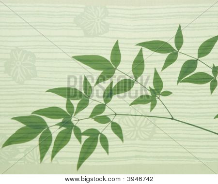 Heavenly Bamboo