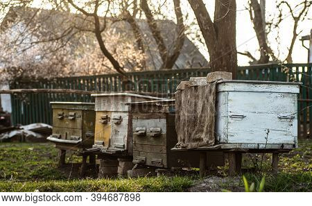 Old Wooden Hives On Apiary Under Cherry Tree. Hives Bloom Ingesday In Spring. Flowering Cherry With