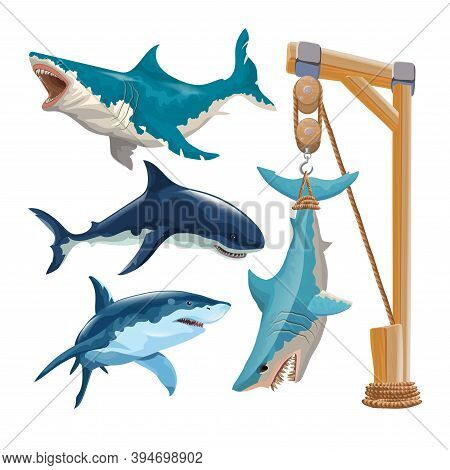 Set Of Different Sharks In Vector. Several Sharks In Motion And Different Colors And A Shark Hanging