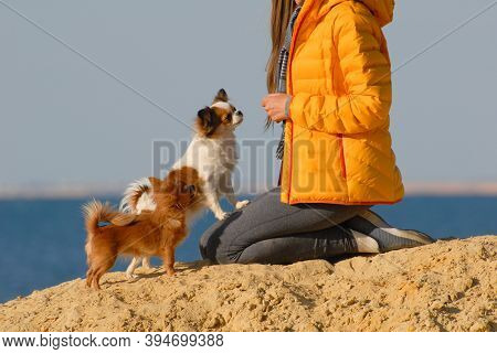 Female Dog Owner In Yellow Jacket Sitting On Knees With Her Two Obedient Small Pet Dogs On Sand Beac
