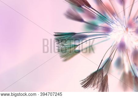 Abstract Blurred Background With Brushes. Dandelion Seeds. Free Space. Abstract Textile Brushes, Pom