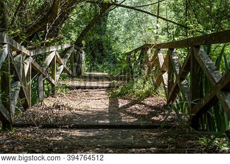 Wooden Footpath Surrounded By Vegetation In Posta Fibreno Nature Reserve Of The Italian National Par