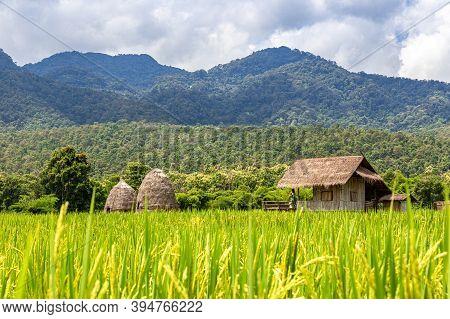 Srtaw Hut Inside Rice Field At Huai Thung Tao Lake In Chiang Mai, Thailand