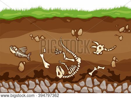 Soil Layers With Bones. Surface Horizons With Fossil Reptile Skeleton, Upper Layer Of Earth Structur