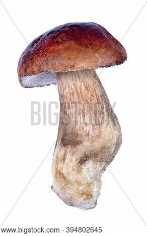 White Mushroom. Cep Mushroom Isolated On White. Boletus.