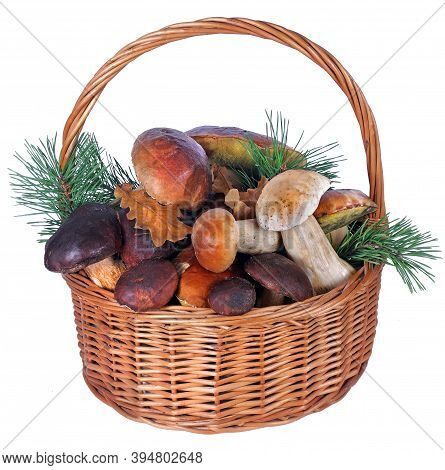 Basket With Mushrooms Isolated On White. White Mushrooms. Cep Mushrooms. Boletus.