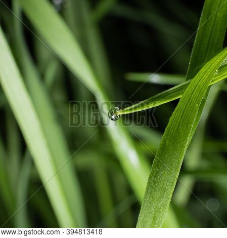 A Dewdrop On The Grass, With The Reflection Of The Background And Other Blades Of Grass