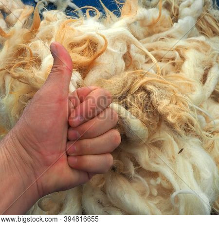 Pure Natural Sheep Wool For Healthy Pillow And Quilt,natural And Pure Sheep Wool, Washed Cleaned She