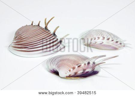 Some beautiful seashells