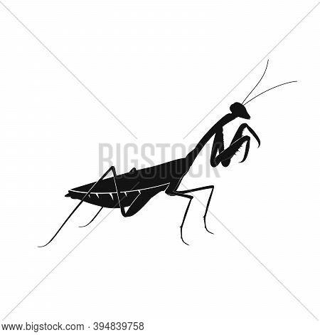 Mantis Icon. Black Silhouette Of Mantis. Vector Illustration. Mantis Icon Isolated.