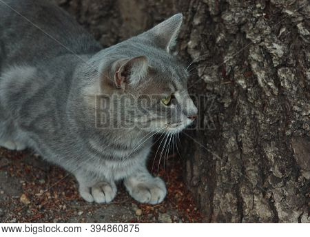 Gray Smoky Kitten On The Background Of A Tree Trunk.