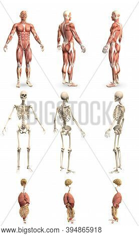 9 In 1, Male Body With Skeleton And Internal Organs - Physiology Concept For Healthcare - Creative H