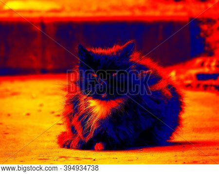 Cat In Scientific High-tech Thermal Imager Seen On Street In Evening