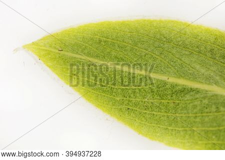 Macrophotography Of Leaf Close Up Colorful View.