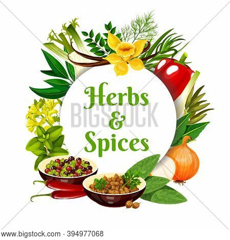 Herbs And Vector Round Frame. Peppercorn, Coriander, Onion And Bay Leaves, Bell Pepper. Paprika, Fen