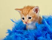 Cute and adorable kitten surrounded with blue feathers with a yellow background poster