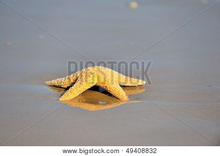 starfish on wet sand at sunrise/sunset poster