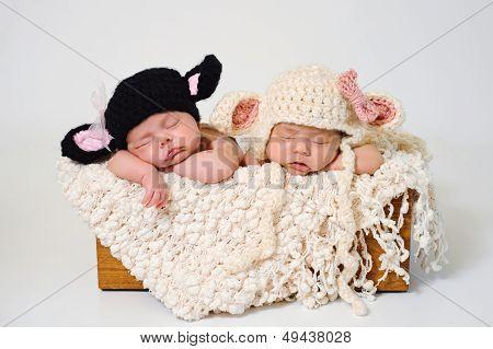 Newborn Twin Girls Wearing Black Sheep And Lamb Hats
