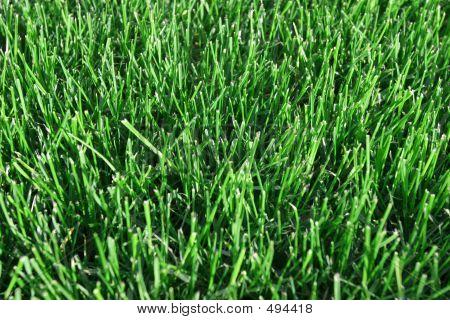 Fresh Clipped Grass