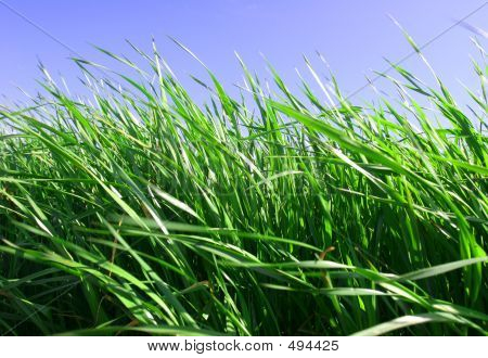 Green Grass, Blue Sky