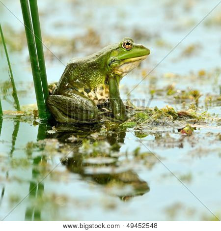 frog in natural habitat