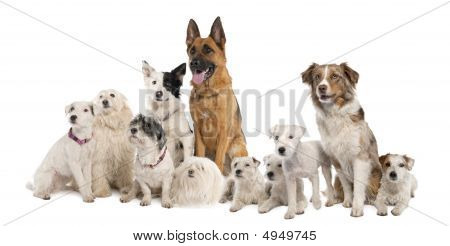 Group Of Dog : German Shepherd, Border Collie, Parson Russell Terrier And Some Crossbreed