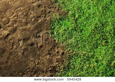 Grass and dirt