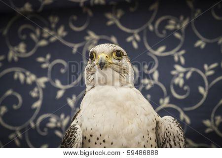 peregrine, falcon, medieval bird, wildlife concept poster